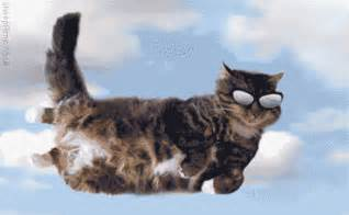flying with a cat cool archives cat gifs