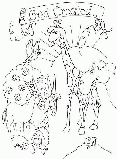 Coloring God Created Creation Printable Bible Animals