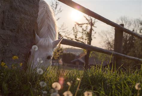 bioresonanz bei pferden gross nutztieren bioresonanz