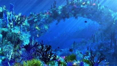 Underwater Fish Tropical Ocean Sea Wallpapers Backgrounds