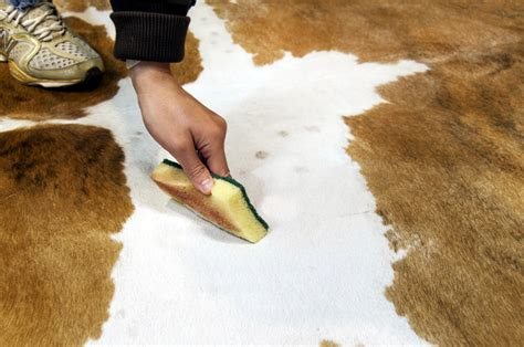 How To Care For Cowhide Rug by Cowhide Cleaning Care Furhomerugs