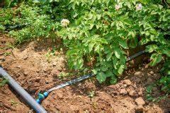 Pflanzen Bewässern Urlaub : pfirsichsorten der gro e berblick ber die wichtigsten sorten ~ Frokenaadalensverden.com Haus und Dekorationen