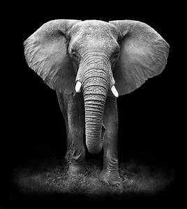Why I Love Elephants So Much