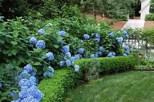 Landscaping with Hydrangeas HGTV