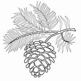 Pinecone Coloring Pages Printable Pine Tree Branch Coloringpages Cone Cones Pinecones Christmas Trees Printables Bing Fall Patterns Branches Leaves Version sketch template