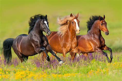 wild horse horses running field government says quality 1k adopt offers