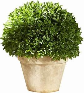 Boule De Buis : boule de buis artificiel en pot ~ Melissatoandfro.com Idées de Décoration