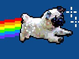 Nyan Cat Scar GIFs - Find & Share on GIPHY