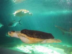 Sea turtles and sharks in the shark tank - Picture of New ...