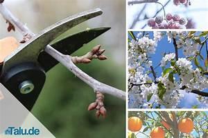Wann Schneide Ich Hortensien : wann soll man hortensien schneiden hortensien schneiden wie sie hortensien richtig schneiden ~ Frokenaadalensverden.com Haus und Dekorationen