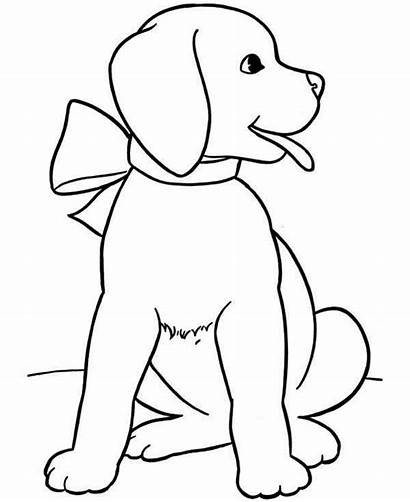 Coloring Puppy Lab Pages Drawing Puppies Chocolate