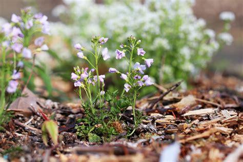 Garten Pflanzen Essbar by Essbare Wildkr 228 Uter Bestimmen Liste Mit 20 Kr 228 Utern