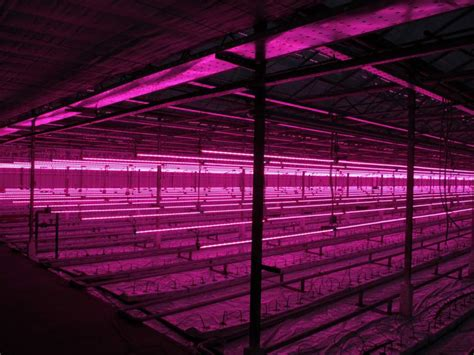 greenhouse led grow lights led grow lights the right led greenhouse lighting