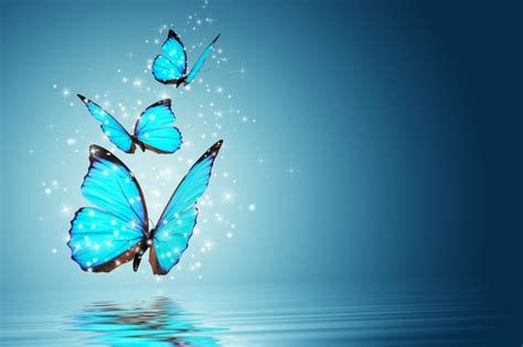 Lovely Cool Photo by Butterfly Hq Wallpaper Simply Wallpaper Just Choose