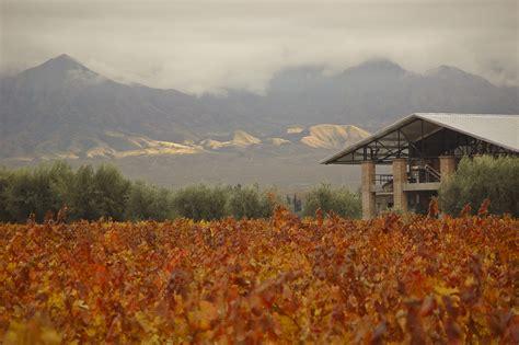 mendoza wine tours biking   vineyards