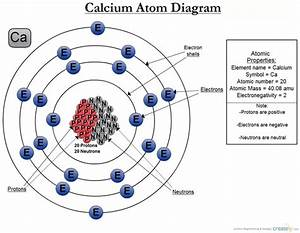 Calcium Is An Element  What Type Of Atoms Is It Made Out
