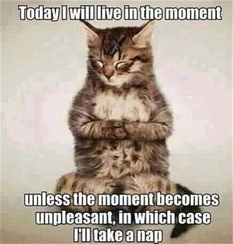 Funny Cat Quotes Quotesgram