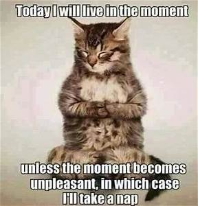 Funny Cat Quotes. QuotesGram