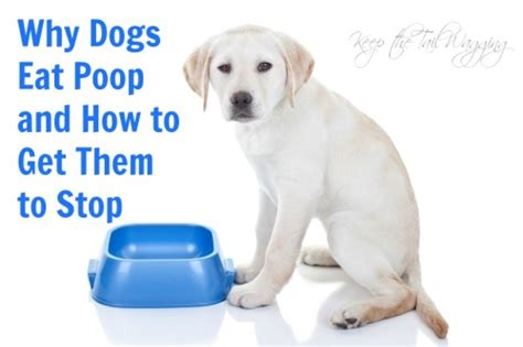 how to stop your dog from eating poop keep the tail wagging