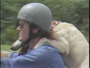 A Motorcycle-Riding Dog Named, well… Dog! – Motley News ...