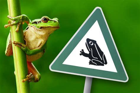 amphibien reptilien  schuetzt ihr heimische arten