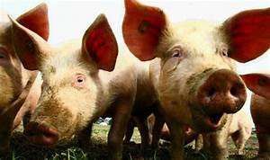 Who Bans German Measles And Swine Flu Over Politicaly Correct Sensitivity Offense Charge