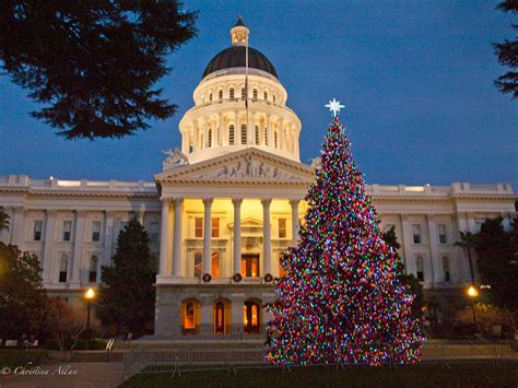 christmas tree lots in sacramento carmichael area chris allan photography state capitol capitol park chris allan photography