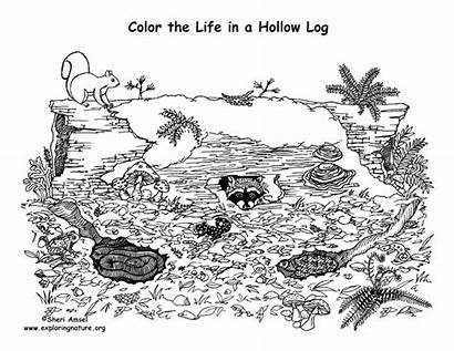Coloring Animals Log Living Hollow Nature Support