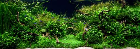 Aquascaping Plants by July 2010 Aquascape Of The Month Quot Anyplace Anytime