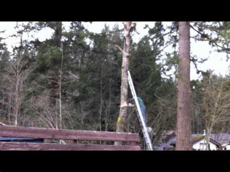 epic tree cutting fail youtube