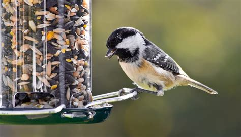 can you feed salted sunflower seeds to birds sciencing