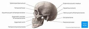 In The Diagram Where Is The Mastoid Process