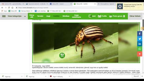 www.DarzaABC.lv apskats - augu slimības, kaitēkļi un augi ...