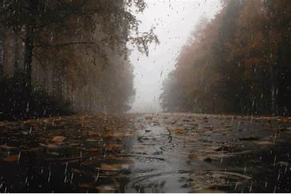 Rain Night Rainy Autumn Viola Earth Cozy