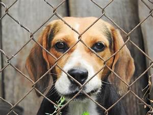 Dog fence for a dog escape artist for Electric dog kennel