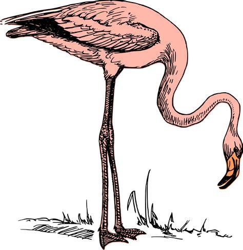 onlinelabels clip art pink flamingo