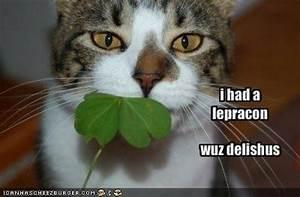 More St Patrick's Day Memes (43 Pics)