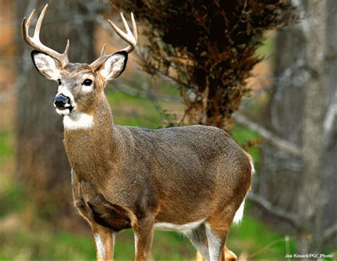 group  hunters propose deer season   nb