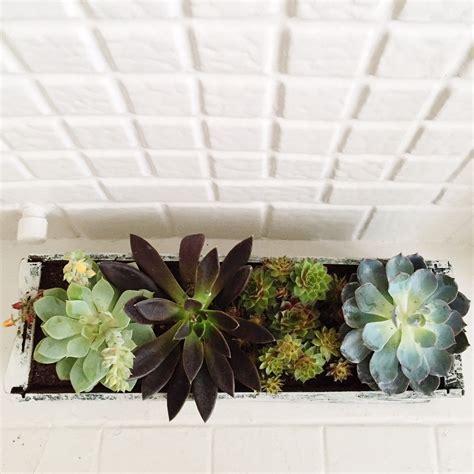 diy window box garden  succulents