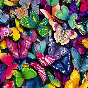 colorful images | Colorful Butterflies iPad Wallpaper HD ...