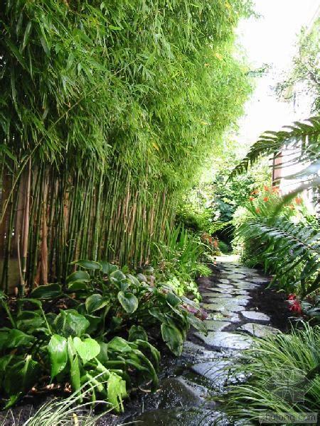 bamboo garden stream gardens landscaping concrete planters