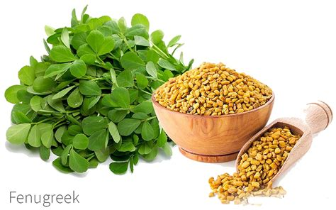 What Is Fenugreek Benefits And Uses Of Fenugreek Seeds