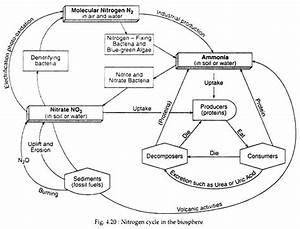 Nitrogen Cycle Diagram Black And White - 17 Ways To Lose ...