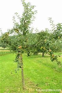 Großen Apfelbaum Kaufen : stihl apfelgarten bittenfelder s mling ~ Lizthompson.info Haus und Dekorationen