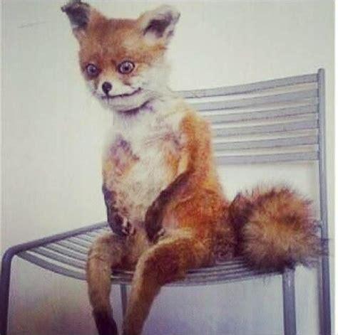 Fox Meme - awkward fox blank template imgflip