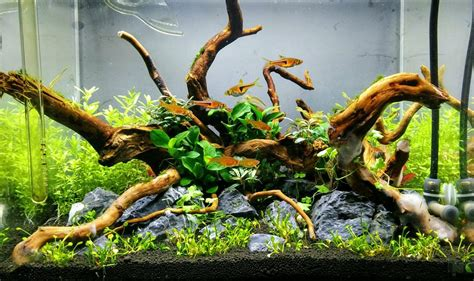 driftwood aquascape can i use stones and driftwood in my planted aquascape