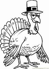 Hat Turkey Wearing Coloring Thanksgiving Coloringpages101 sketch template