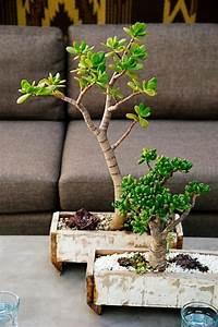 Pflege Bonsai Baum Indoor : den bonsai baum richtig und praktisch pflegen tipps ~ Michelbontemps.com Haus und Dekorationen