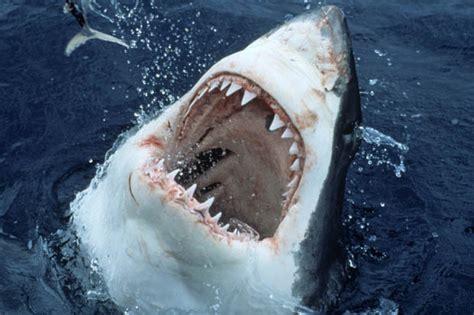 shark sea monster cannibal eating sharks eats godzilla eaten monsters kraken loch ness caribbean cannibalism mystery apex whites australia