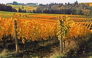 wine country pictures oregon wine country by margaret hood